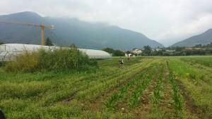 Conca D'Oro Social Farm